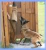 Club canino: EL RANCHO DEL CONFORT