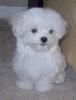 Club canino: perros super estrellas