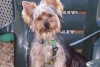 Club canino: Pequeños peludines
