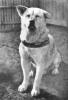 Club canino: Sieempre A Tu Lado