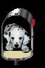Club canino: superperro