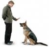 Club canino: Gran Can