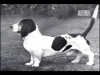 Club canino: Club canino : tu perro esta bien