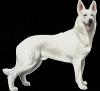 Club canino: Club Dogzy