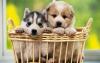 Club canino: Mimos y mimos