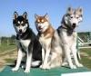 Club canino: Los perros al poder