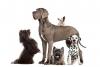Club canino: Nuestros Mejores Amigos
