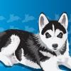 Club canino:  •dogs club• 