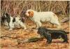 Club canino: La cola del Spaniel