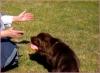 Club canino: La pradera de los perros