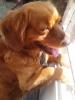 Club canino: Hunde :D