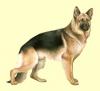 Club canino: kitsmax