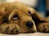 BlueMystic - Dogzer criador de perros