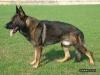 A.Sofia - Dogzer criador de perros
