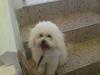 Jovis10 - Dogzer criador de perros