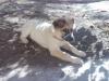 FLORINDI - Dogzer criador de perros