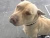 Pirucha_1999 - Dogzer criador de perros
