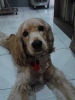 hielo27055 - Dogzer criador de perros