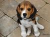 isamlh - Dogzer criador de perros