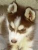 manchas626 - Dogzer criador de perros