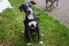 Milerocsan - Dogzer criador de perros