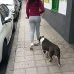 Amira - American Staffordshire Terrier (3 años)