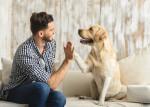 Un Labrador et son maître font un