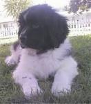 Bepper - Lobo (11 meses)