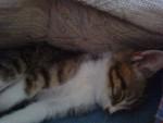 Gato - Macho (1 año)