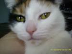 Gato - (3 años)