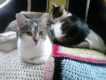 Gato - Macho (4 años)