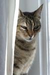 Gato  -  (Acaba de nacer)