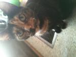 Gato Pepper - Hembra (2 años)
