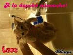 Gato - (6 meses)