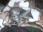 Gato - Macho (5 meses)