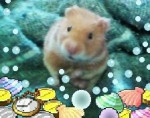 Ratón rabito - Macho (1 año)