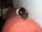 Ratón Délice - Hembra (11 meses)