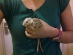 Ratón Murphy and Peanut (gerbils not mice!) - Macho (3 meses)