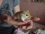 Ratón Terreur - Macho (1 año)