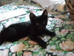 Hunter - (3 meses)