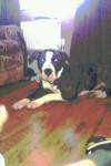 Bella - (2 años)