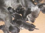 Perro Cachorritos -   (11 meses)