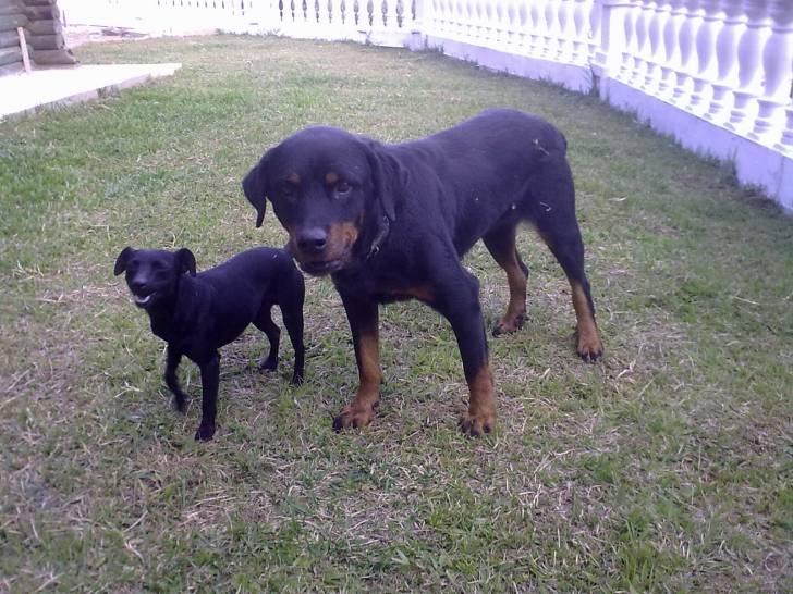 Perro Rita y Chepe -   (0 meses)