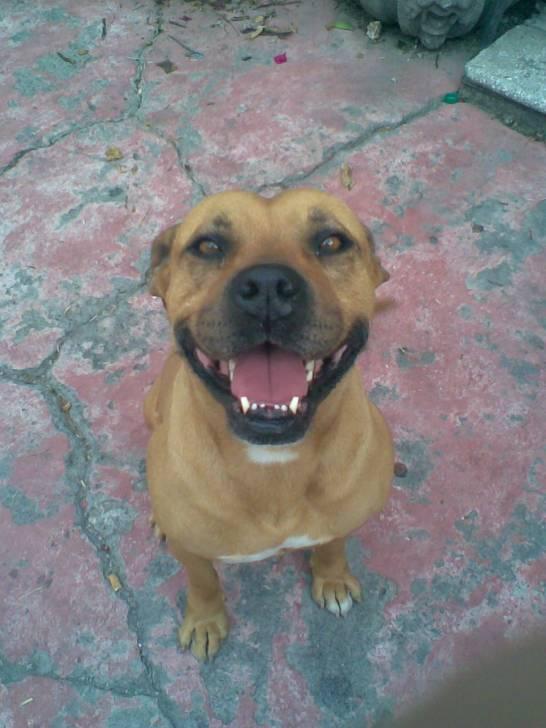 Perro Escar -  Macho (12 años)