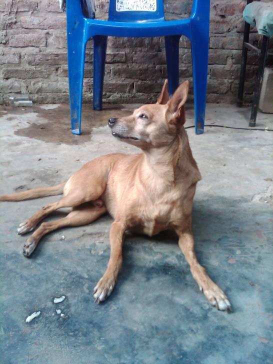 Rey - Macho (10 años)