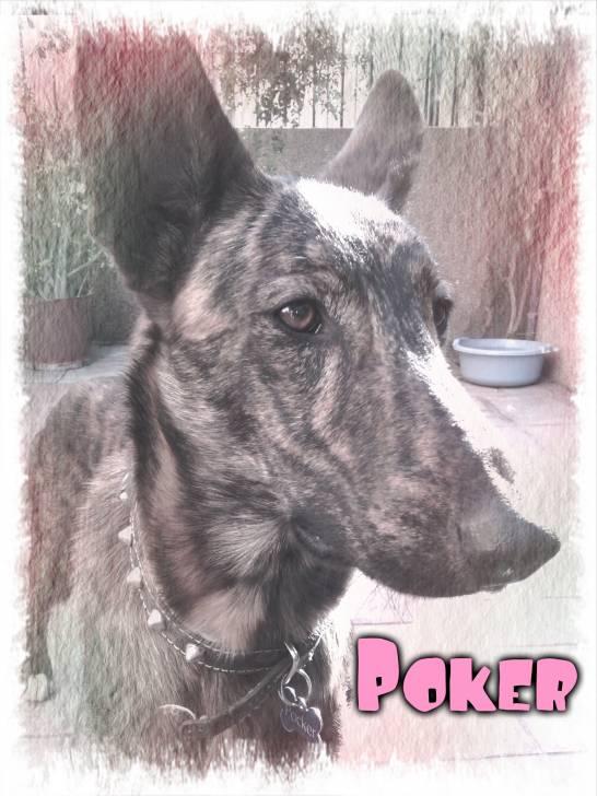 Fotos De Perro Poker