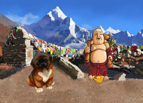¡Adopta un perro descendido directamente del Himalaya: el Spaniel tibetano!